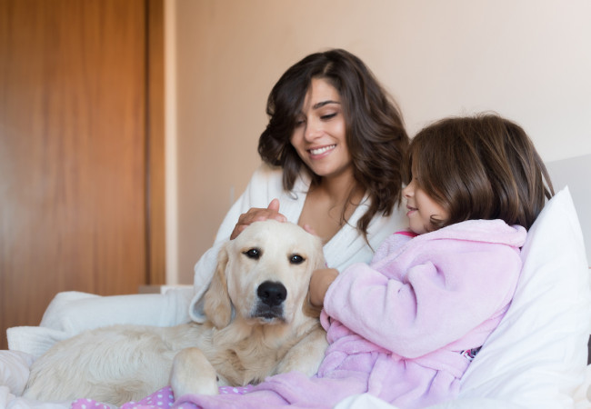 Simple & Effective Tips to a Pet-Friendly & Clean Home