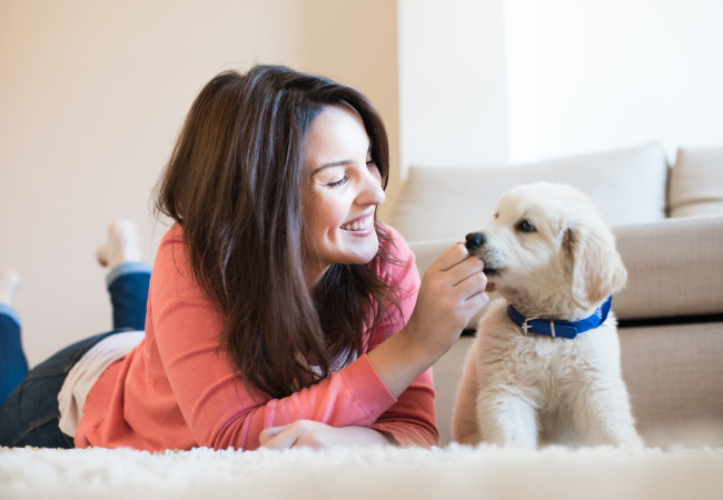 Pet Proofing Your Home